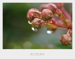 frutfior