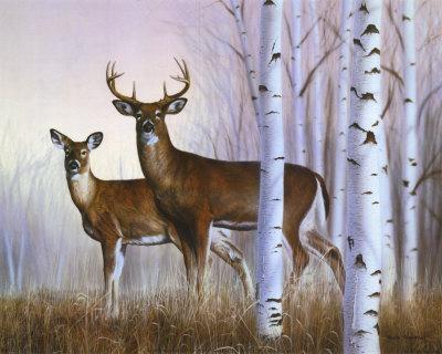 frentner-rusty-cervo-in-un-bosco-di-betulle